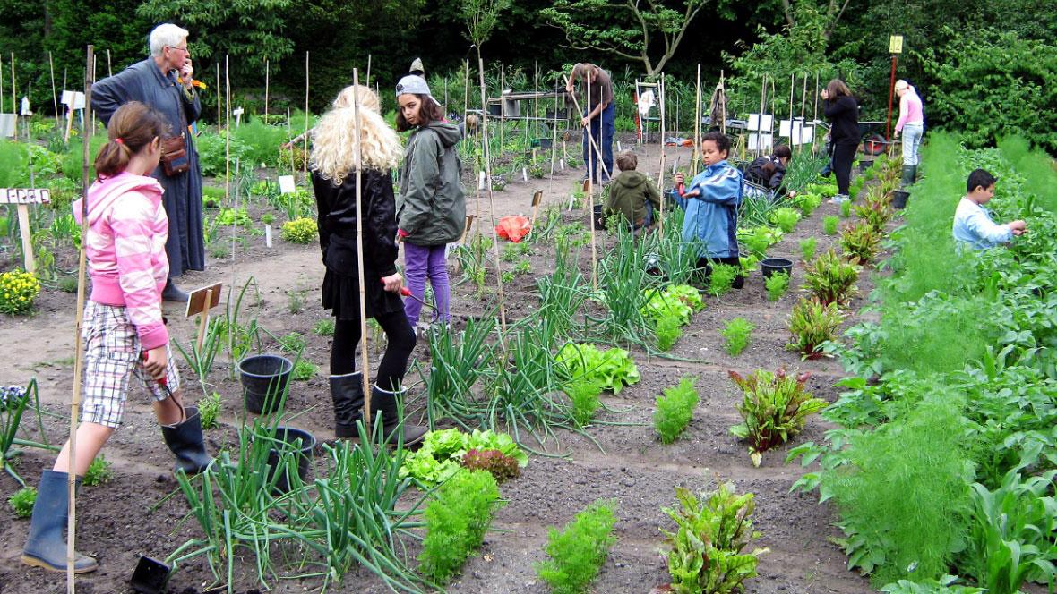 natuur-en milieu schoolwerktuinen kinderen